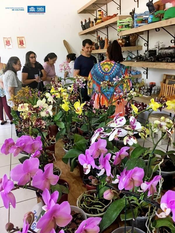 Exposição de Orquídeas será realizada de 17 a 18 deste mês na Casa do Artesão de TL